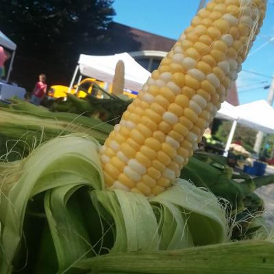 Our Famous Sweet Corn
